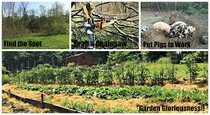 how to turn woods into a garden u2013 farm fresh for life u2013 real food