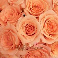 bulk roses sweetheart roses extraordinary buy bulk at fiftyflowers