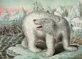 vintage polar bear illustration free stock photo public domain