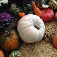 halloween ghost pumpkin rowan ash artistry