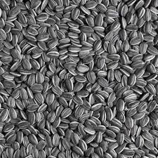 sunflower seeds 2010 by ai weiwei dezeen