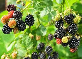 Backyard Fruit Trees 7 Easily Propagated Fruits For Transforming Your Backyard Into A