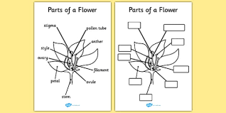 the tiny seed plant growth topic foundation stage flower