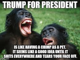 Chimp Meme - bonobo lyfe meme imgflip