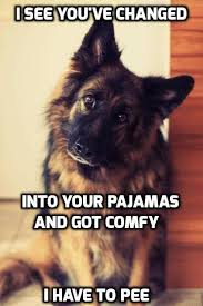 Funny German Shepherd Memes - and when you do let me out i ll want back in in 5 min or less
