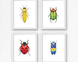 insect wall art etsy