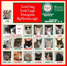 angels among us pet rescue home facebook