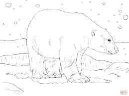 polar bear coloring page free printable coloring pages
