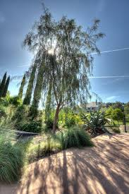 Good Backyard Trees by San Diego Trees Guide Best Types To Plant In Your Yard Install