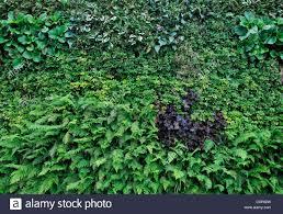 living green wall vertical garden gardening urban small space