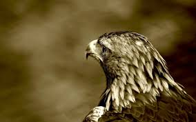close up eagle bird 6908271