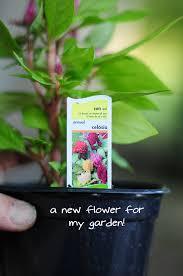 work day planting new seeds raised urban gardens