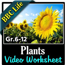 bbc life plants video questions worksheet editable by