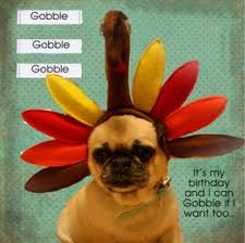happy thanksgiving birthday festival collections