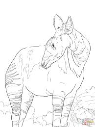okapi coloring pages