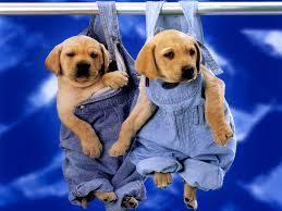 best 25 super cute puppies ideas on pinterest cute puppies