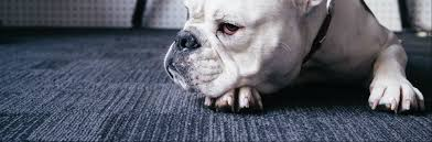 which is the best flooring for dogs kennington flooring