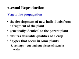 Asexual Reproduction Worksheets Ppt Angiosperm Plant Reproduction Chap 28 Powerpoint