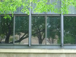 bird friendly buildings animalia project