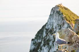 Show Gibraltar On World Map by Fascinating Facts About Gibraltar