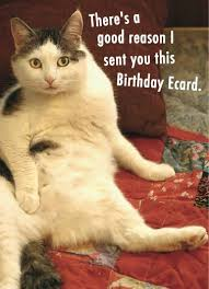 Cat Birthday Cards Funny Cats Ecards Cardfool