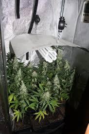 chambre de culture cannabis complete cultiver du cannabis avec des les basses consommation du