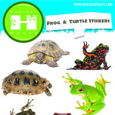 wall stickers wall stickers and decals thousands pictures of frog u0026 turtle stickers u2013 habitat wraps