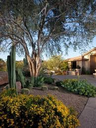 great desert landscaping ideas for front yard home designs