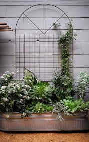 Build A Trellis by Best 25 Metal Trellis Ideas Only On Pinterest Wall Trellis