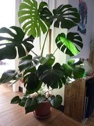 Plants For Bedroom 11 Answers What Are The 3 Best Indoor Plants For My Bedroom