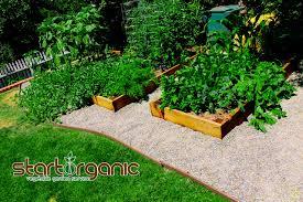 home garden startorganic vegetable garden service