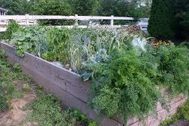 tips on starting a vegetable garden for beginners