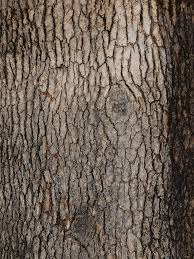 brown tree best 25 tree bark ideas on bark of tree