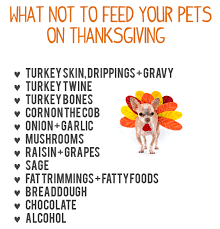 harmful to pets thanksgiving dos and don ts news for page lake