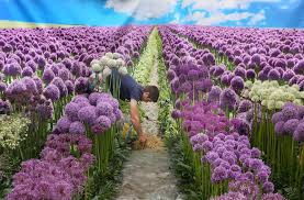 largest flower in the world art illusions at the largest flower show in the world