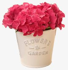 potted flowers potted flowers pink fresh flowers png image and clipart for free