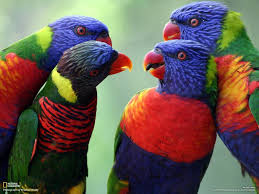 parrots in paradise kealakekua hawaii exotic bird 276 best tropical paradiso images on pinterest destinations