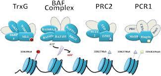 epigenetic reprogramming in stem cells intechopen