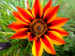 flowers and plants images about pretty plants on pinterest desert