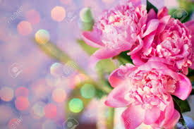 The Pink Peonies by Beautiful Bouquet Of Flowers Pink Peonies Stock Photo Picture
