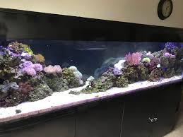 best type of rock for a marine saltwater fish tank aquarium