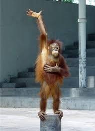 Raising Hand Meme - monkey raising hand blank template imgflip