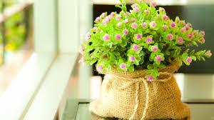 cute plants flower hd wallpapers