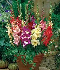 Plant Flower Garden - 25 best annual flowers ideas on pinterest perennial flowering