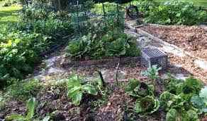 harvesting tips for extending your fall vegetable garden