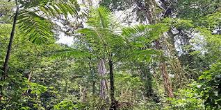 Dominant Plants Of The Tropical Rainforest - tropical rain forest