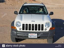 australian shepherds sitting as if they are driving a 2007 jeep