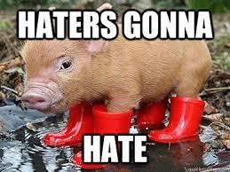 Funny Pig Memes - 15 very funny pig memes i can has cheezburger