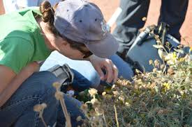 colorado native plant society why learning about native plants matters two decades of