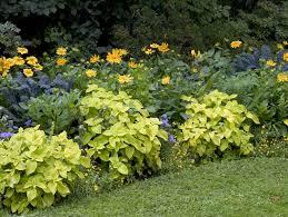 perennial garden ideas sun best 25 full sun garden ideas on